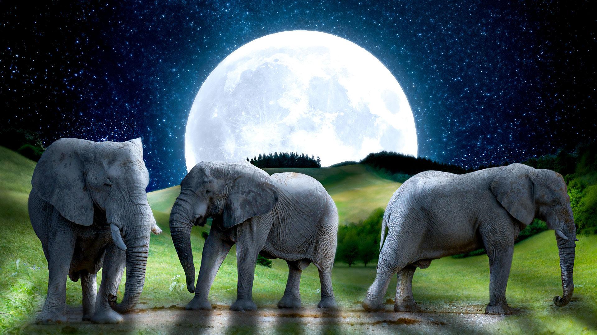 פוטומניפולציה פילים לאור ירח בפוטושופ 1